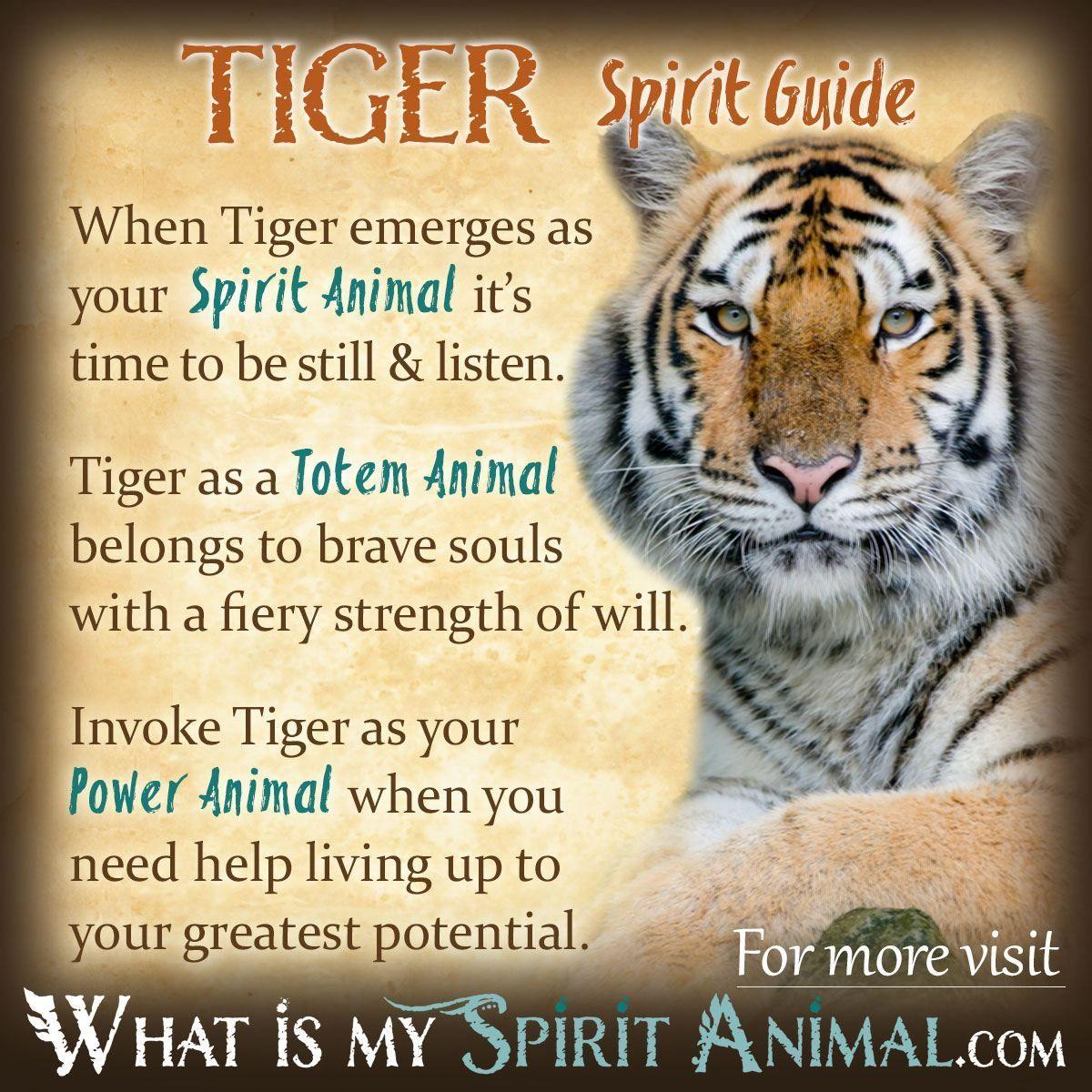 Related Image Tiger Spirit Animal Animal Totem Spirit Guides Power Animal