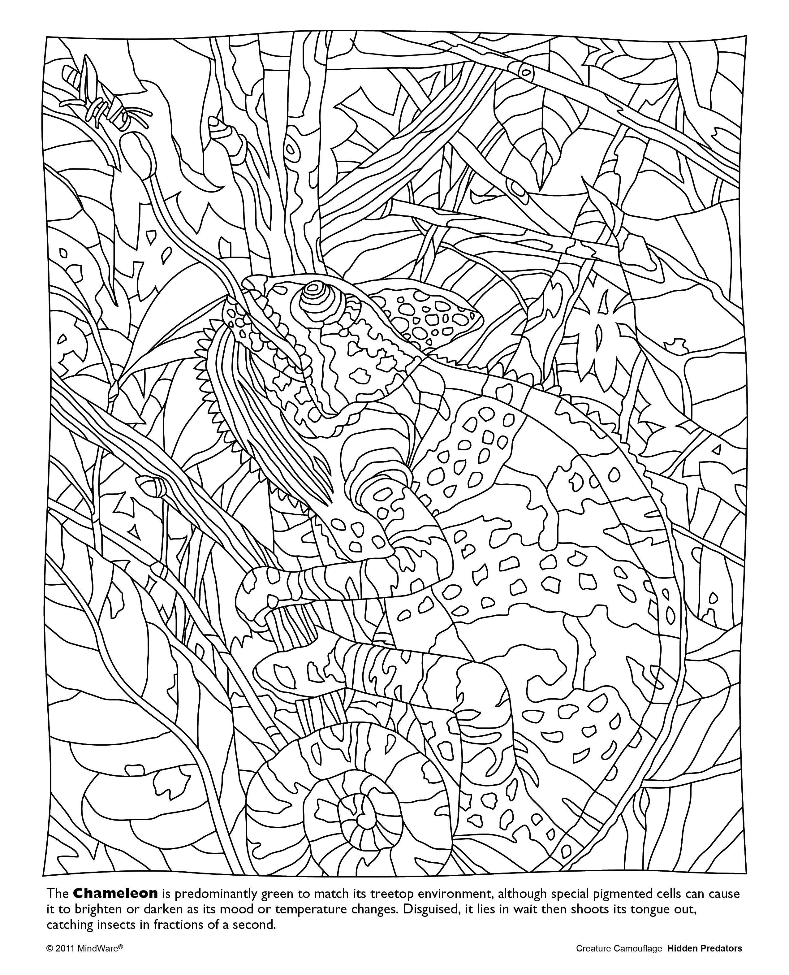 Hidden Predators Coloring Book Animal Coloring Books Animal Coloring Pages Printable Coloring Book
