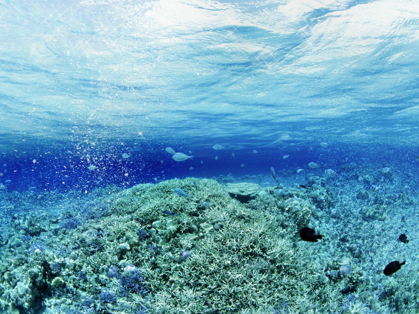 trine underwater scene wallpapers hd wallpapers wallpapers under water wallpapers