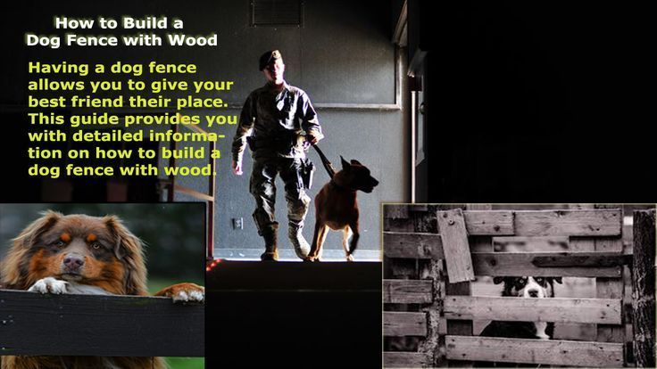 How to Build a Dog Fence with Wood Using Easy Step  How to Build a Dog Fence with Wood Using Easy Step