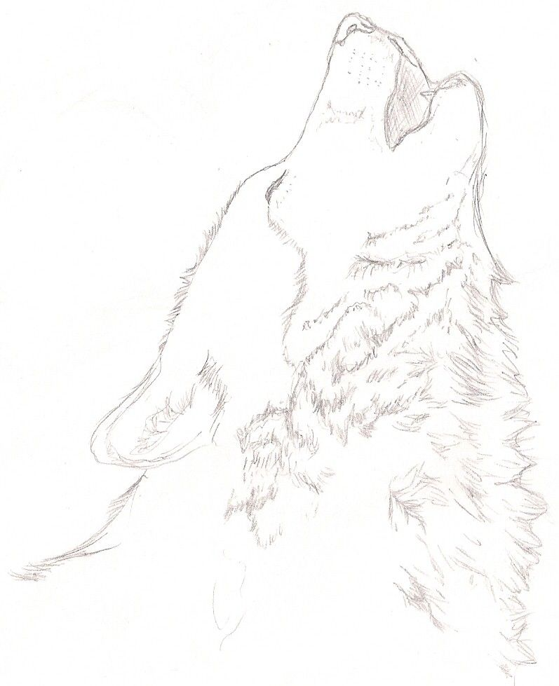 Simple howling wolf sketch - photo#3
