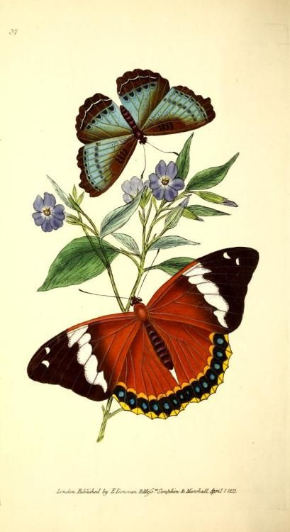 Photo of Scientific Illustration