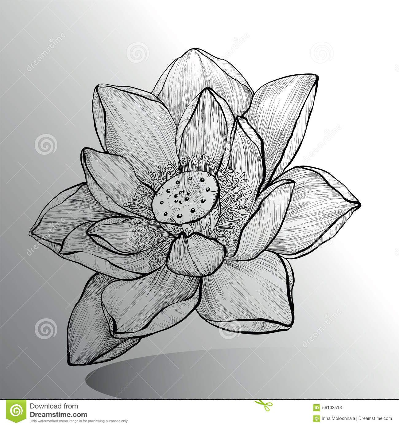 Pin By Loly On Sketchbook Pinterest Drawings Lotus And Flower