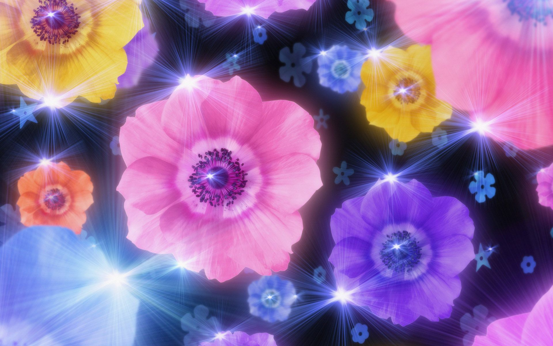 Worlds Top Beautiful Flowers Images Wallpaper Photos Free