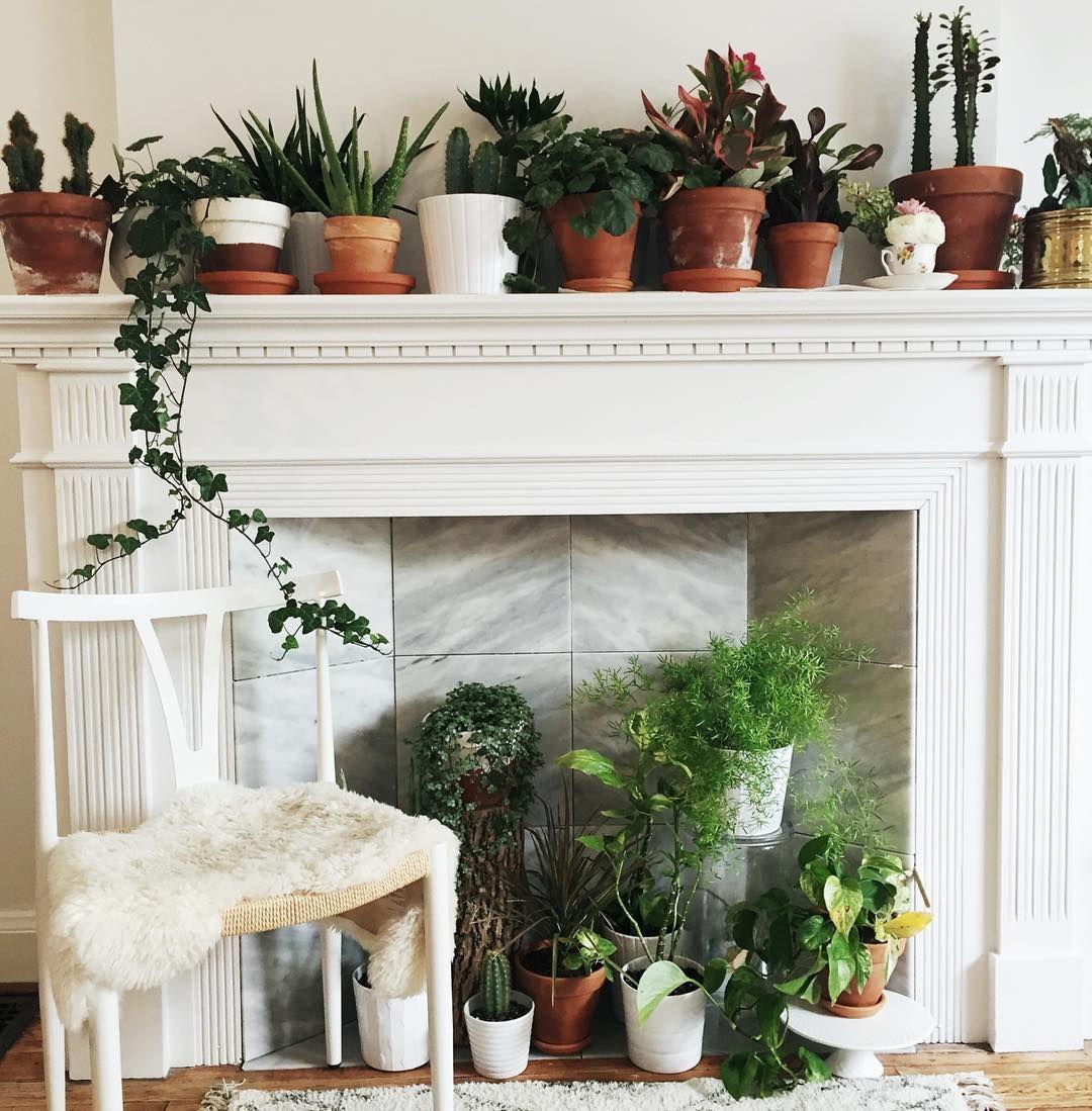 The best kind of fireplace Plant decor inspiration fireplace decor