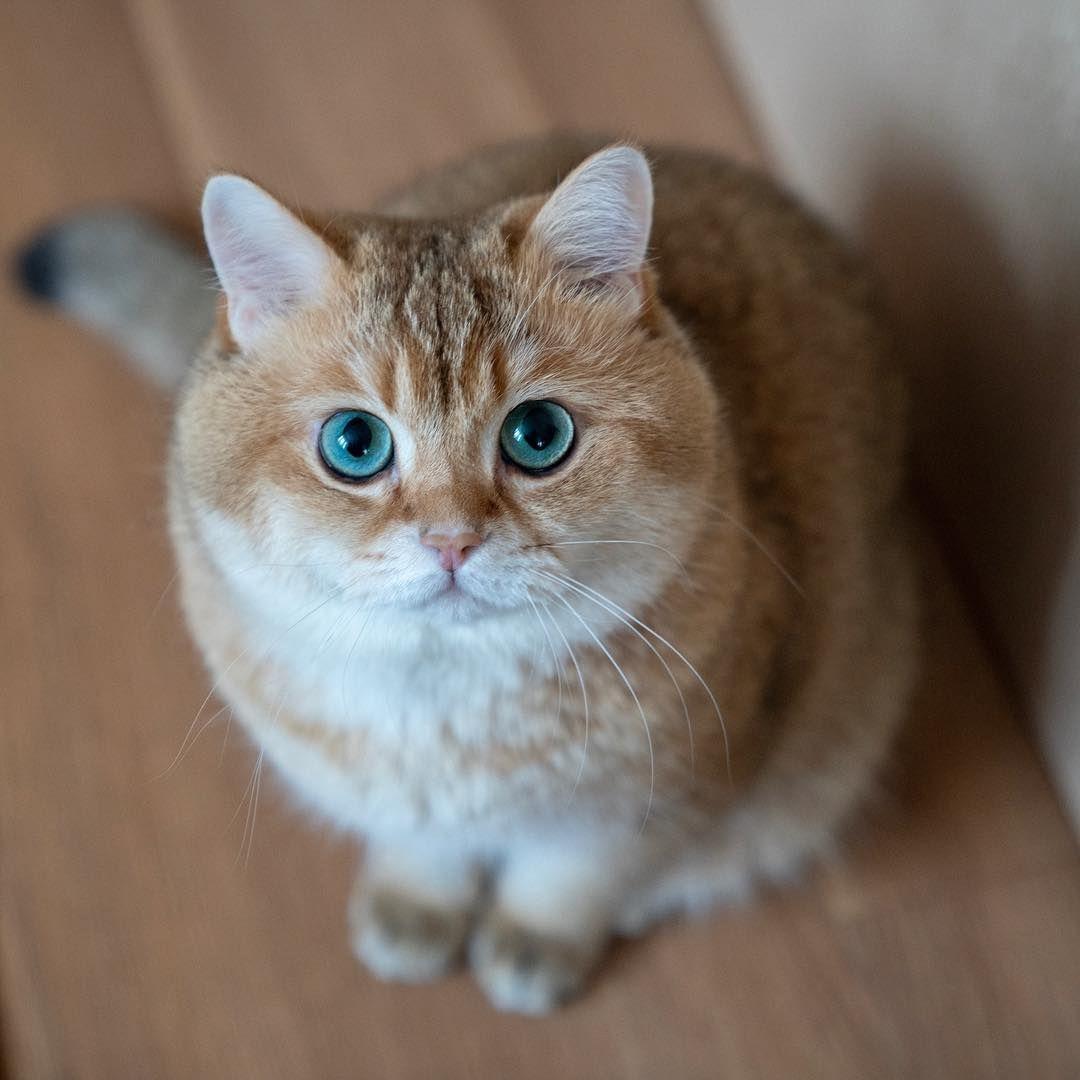 Gambar Mungkin Berisi Kucing Kittens Cutest Cats And Kittens Cats