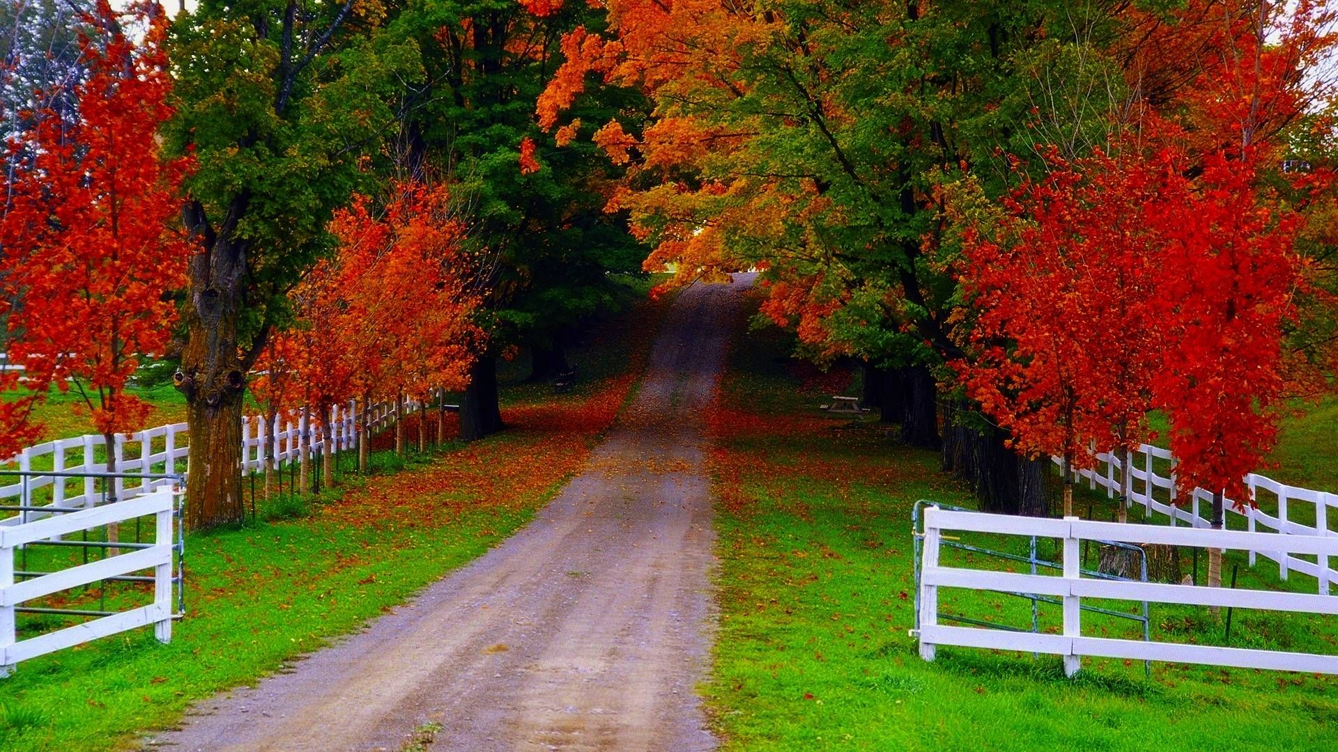Hd Wallpapers Nature Fall Hd Cool 7 HD Wallpapers