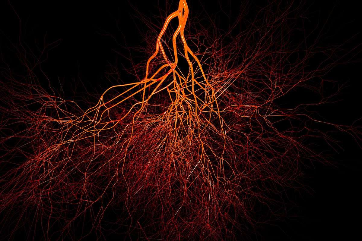There S A Newly Discovered Network Of Blood Vessels In Our
