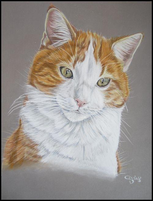 Portrait De Chat Roux Et Blanc Au Pastel Sec Par Cindy Barillet