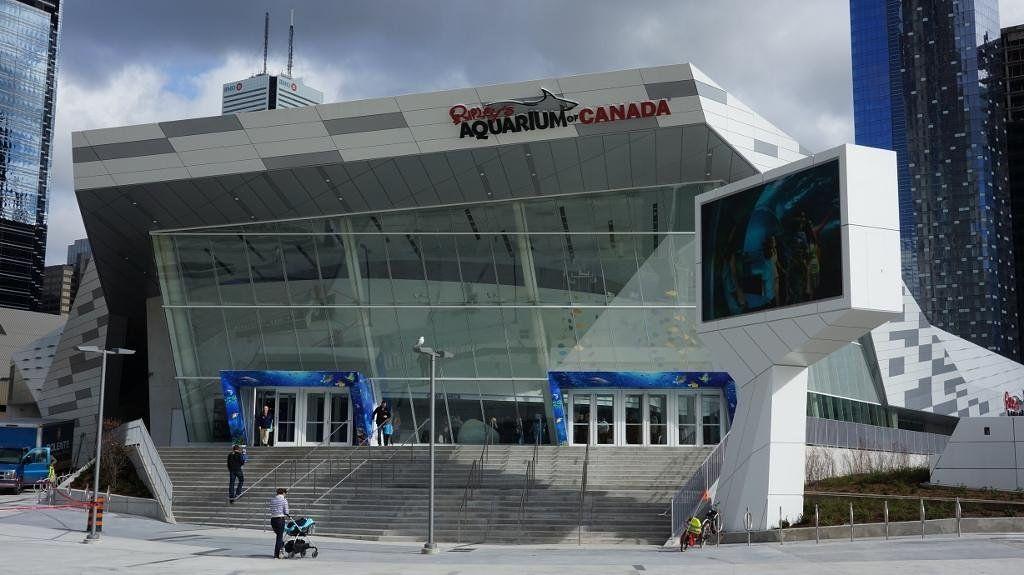 Ripley's Aquarium Of Canada   Ripley aquarium, Trip ...