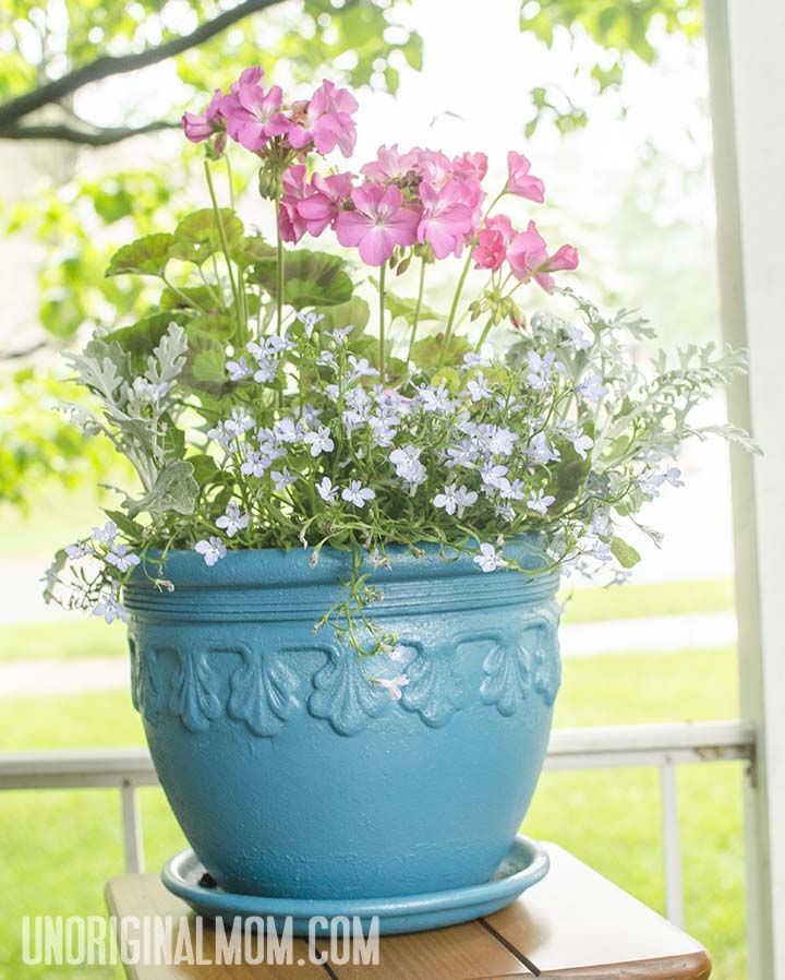 Give An Old Flower Pot New Life With Some Spray Paint I Put Geranium Dusty Miller And Lobelia In This Aqua Colored It S So Cheerful