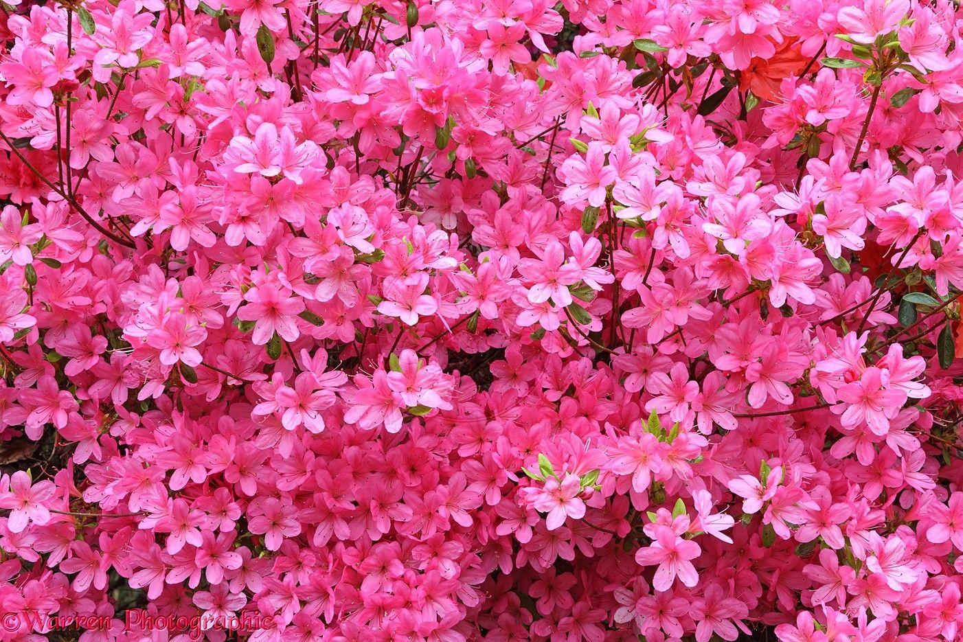 100 flowers pink best 25 pink daisy ideas on pinterest pink