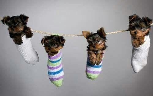 Laundry puppies