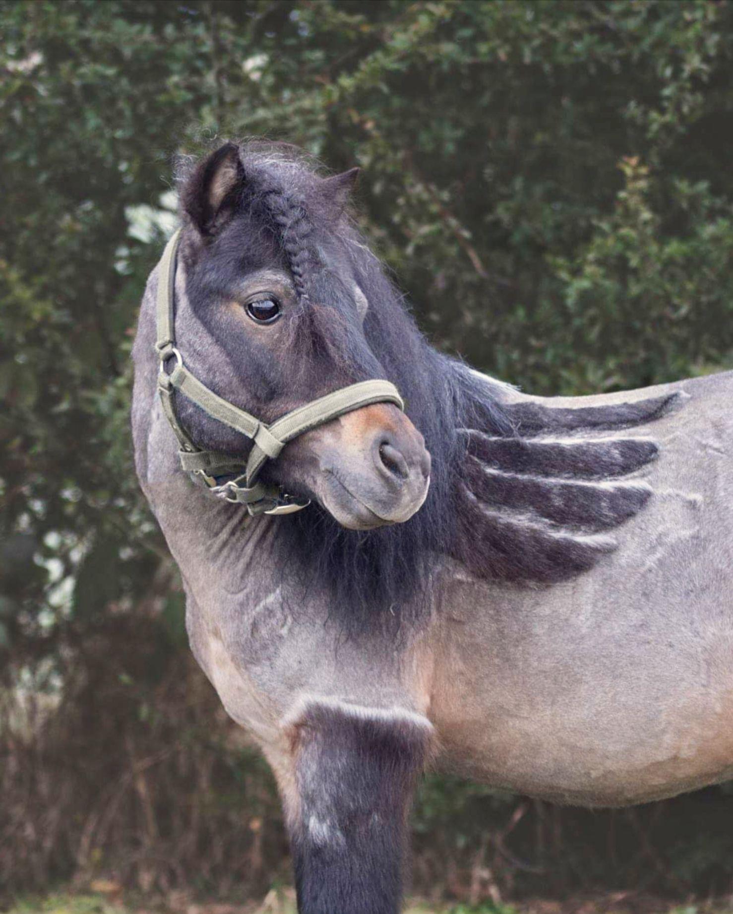 Пин на доске Ω Horses Ω