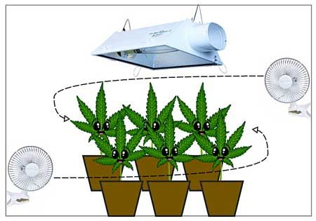 Make sure any indoor cannabis grow setup has lots of air for Air circulation in a room