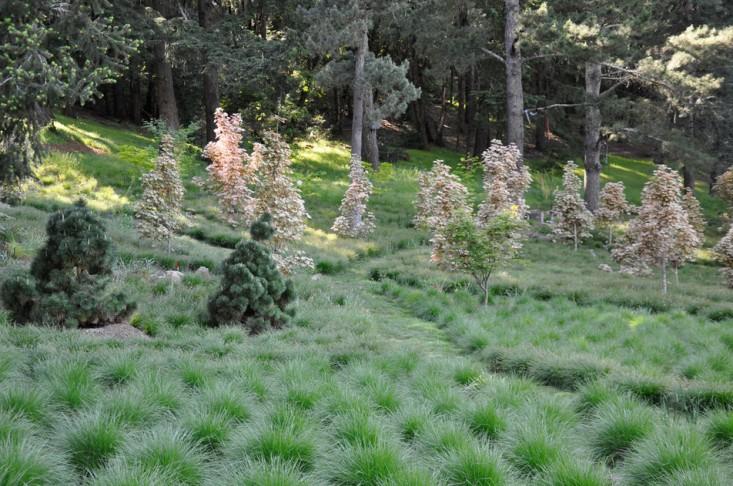 Photo of Expert Advice: 8 Tips for a Meadow Garden from Grass Guru John Greenlee – Gardenista