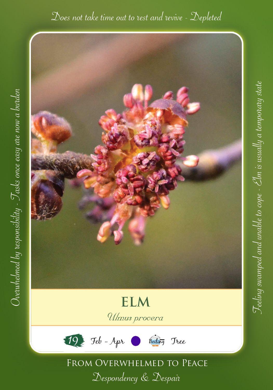 Bach Flower Remedy Elm Bach Flower Remedies Pinterest Bach