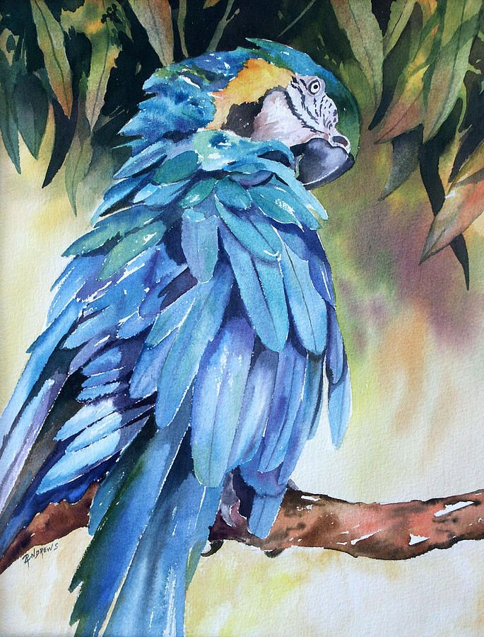Baby The Blue And Gold Macaw Painting  - Baby The Blue And Gold Macaw Fine Art Print