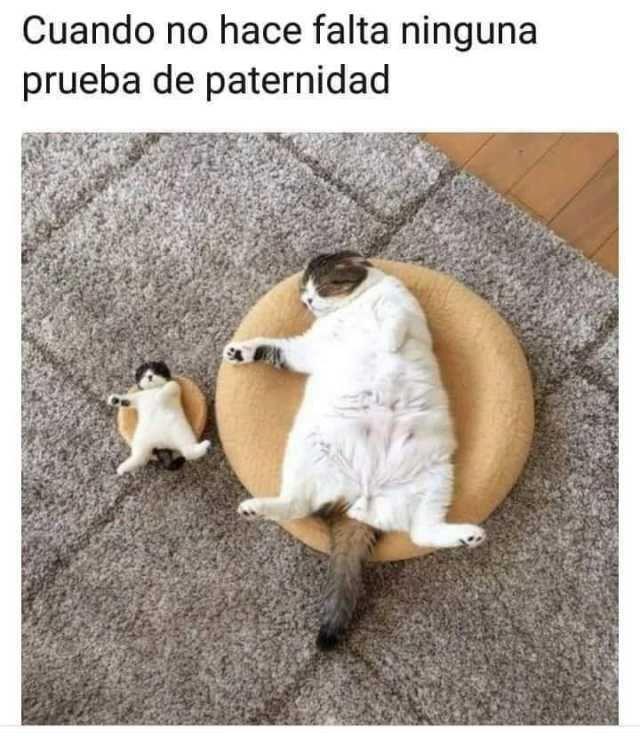 Pin De Valeria Rivera En Divertido Meme Gato Gatitos Divertidos Humor Divertido Sobre Animales