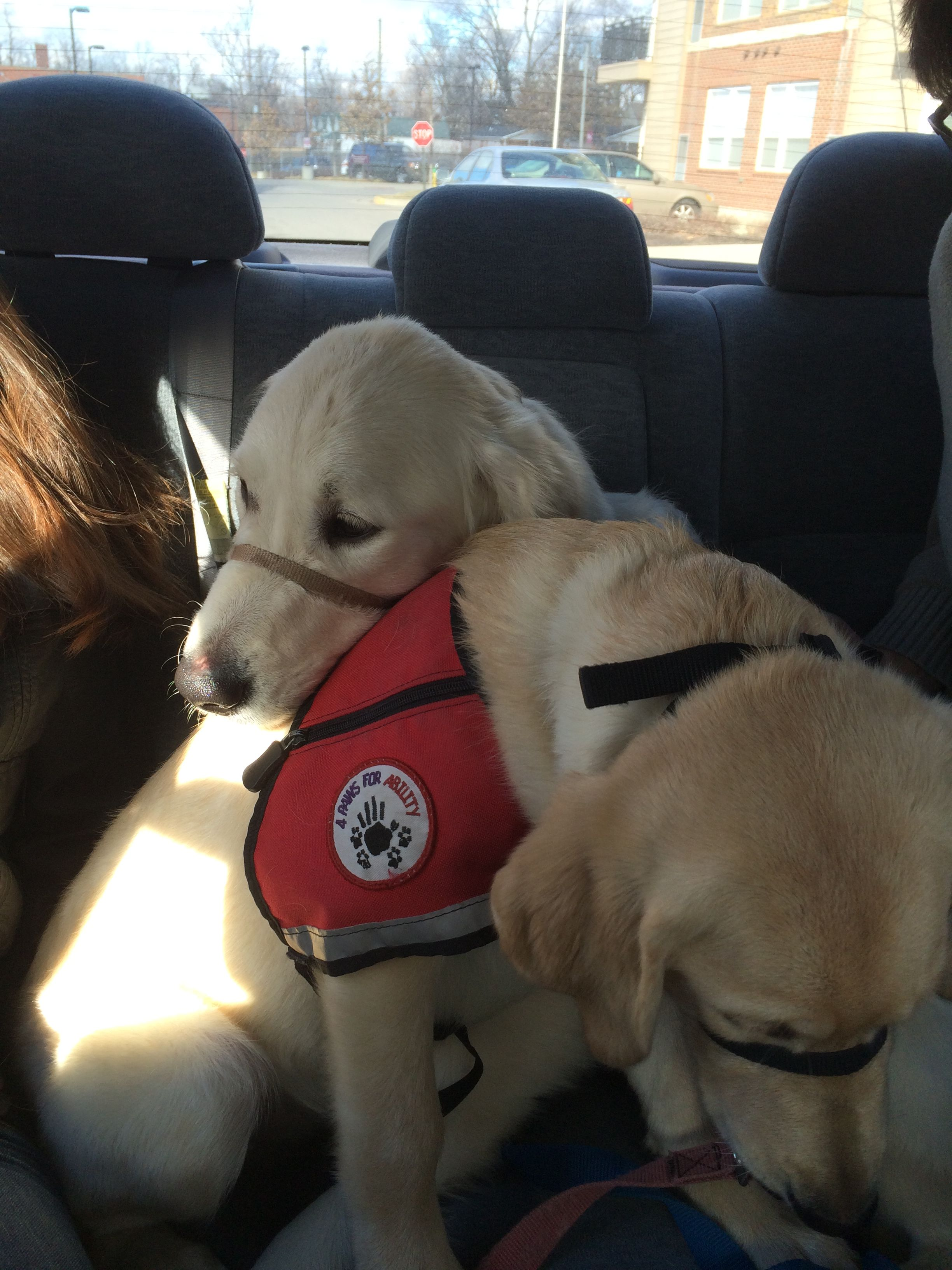 Meet The Dogs Of Uk S 4 Paws For Ability Dogs Service Dogs