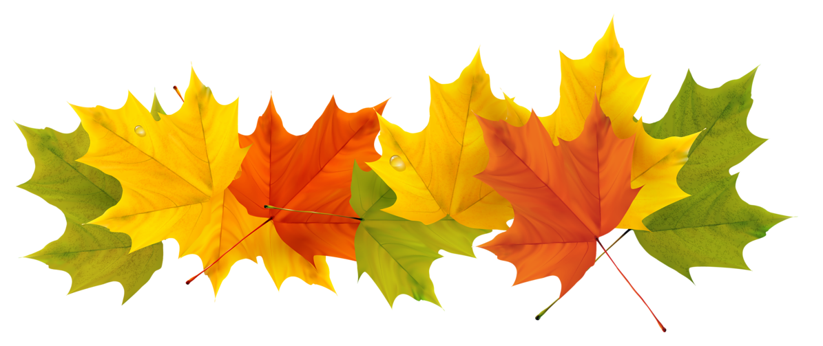 Transparent Fall Leaves Png Picture Gallery Yopriceville High Quality Images And Transparent Png Free Clipart Fall Leaves Png Fall Clip Art Clip Art