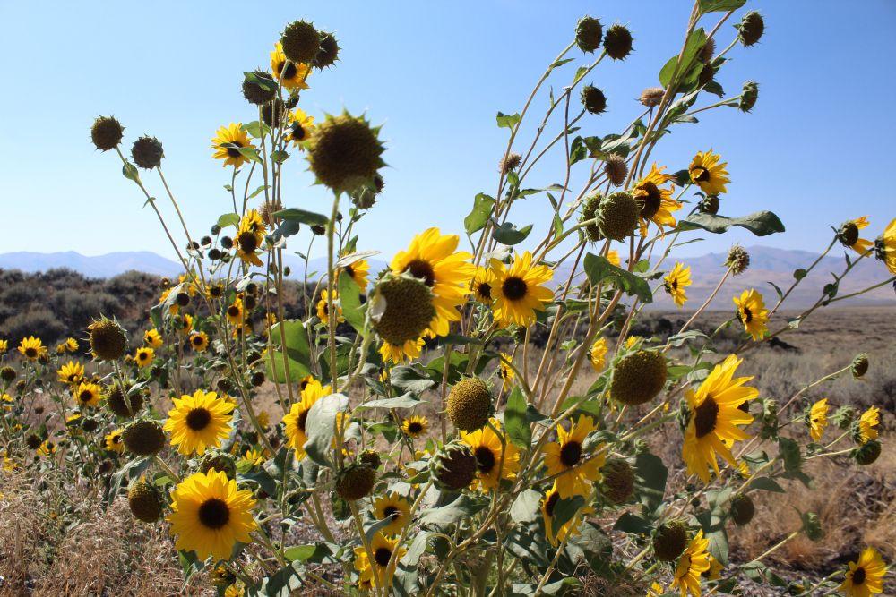 DIY Wildflower Seed Bombs Wildflower seeds, Seed bombs