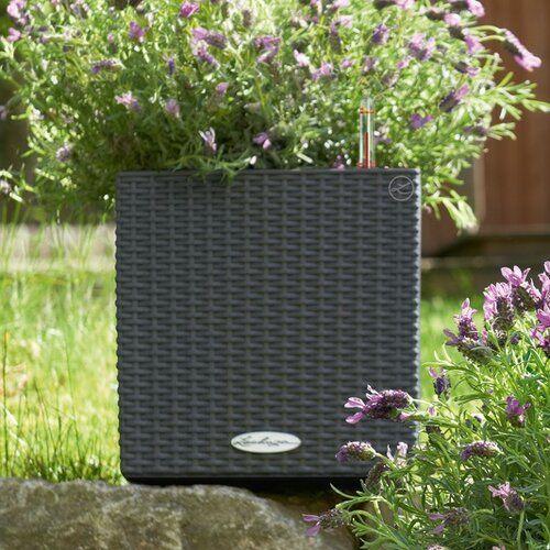 Blumenkübel aus Rattan mit Bewässerungssystem Lechuza Farbe: Granit, Größe: 30 cm H x 30 cm B x 30 cm T #selfwatering