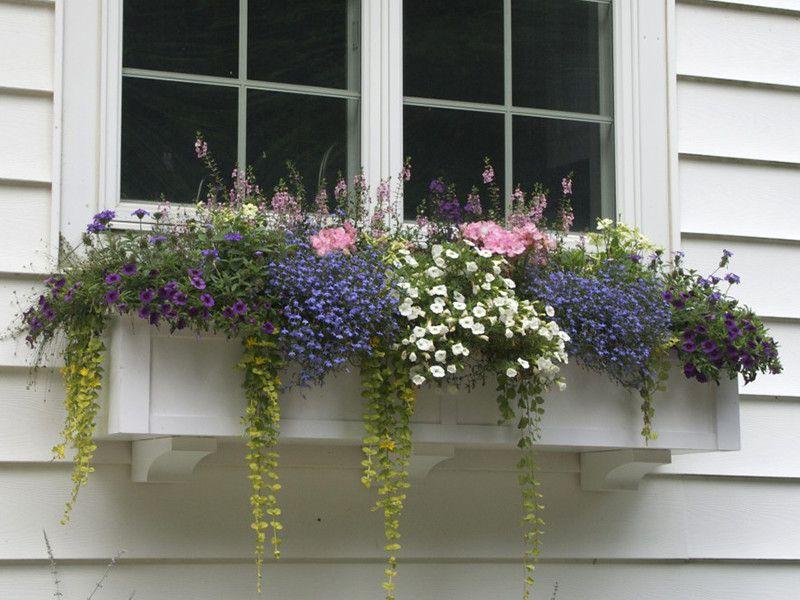 Windowbox Com Window Box Flowers
