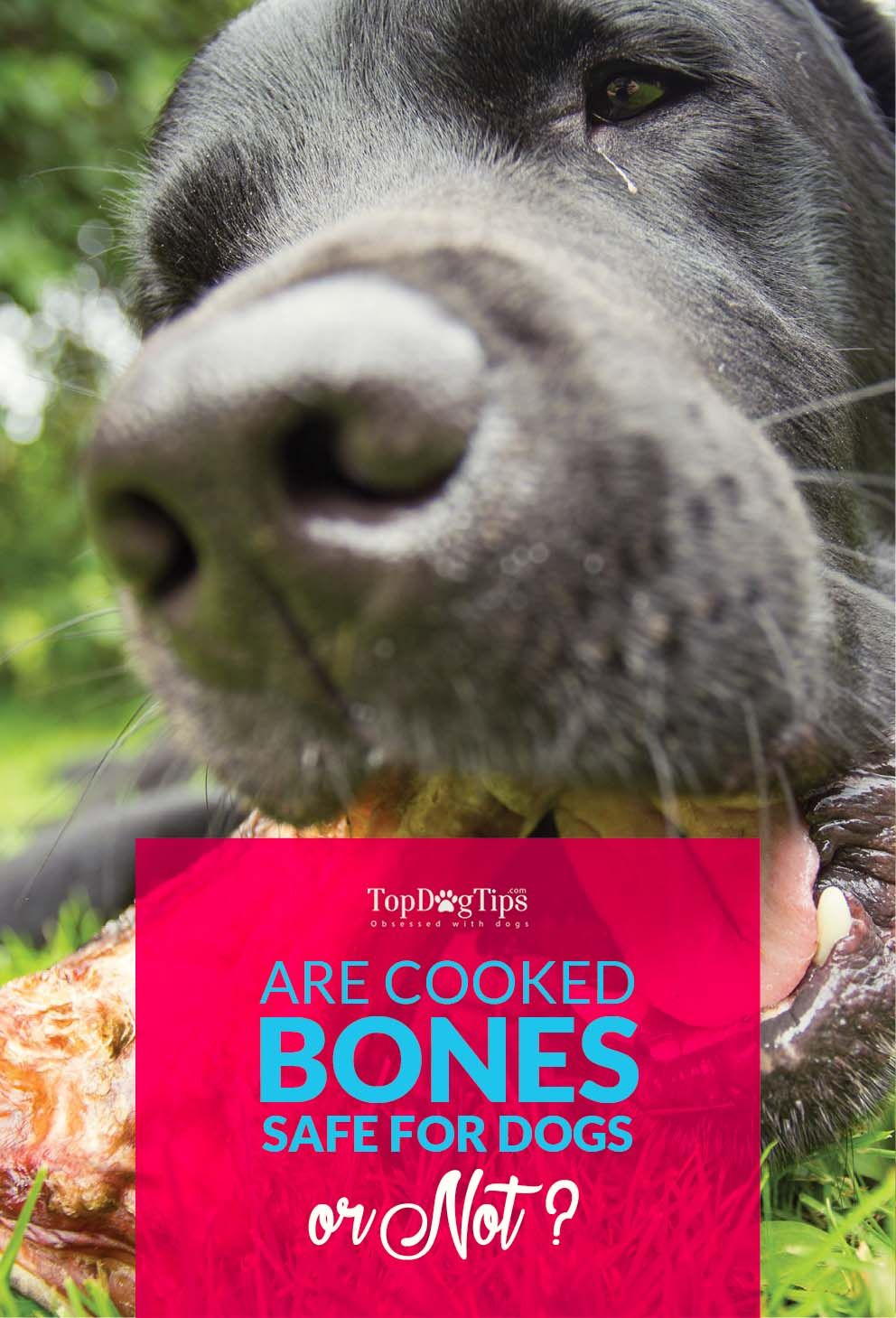 Cooked Bones For Dogs May Not Be A Good Idea Dogs Dog Chews