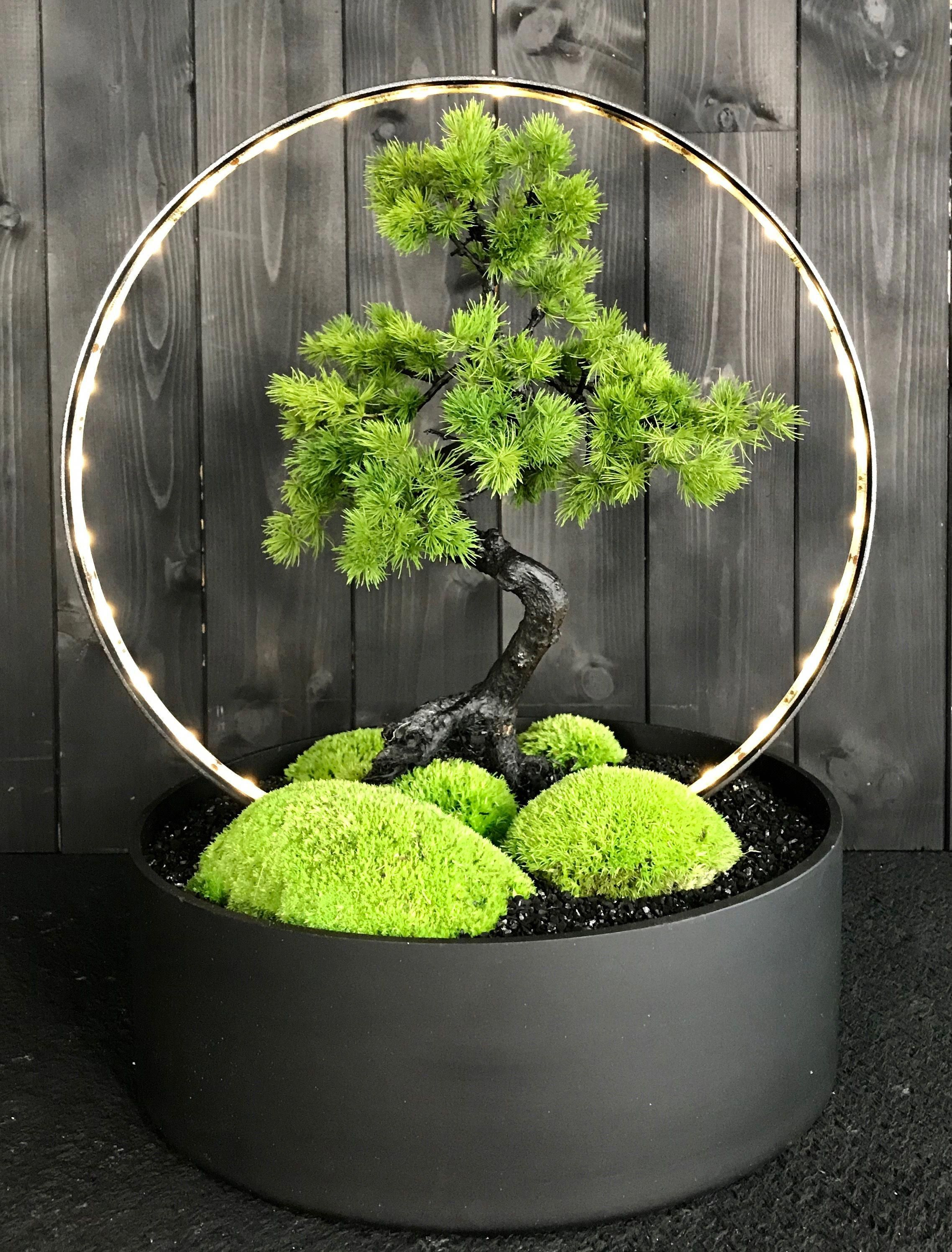 Types Of Bonsai Trees With Images