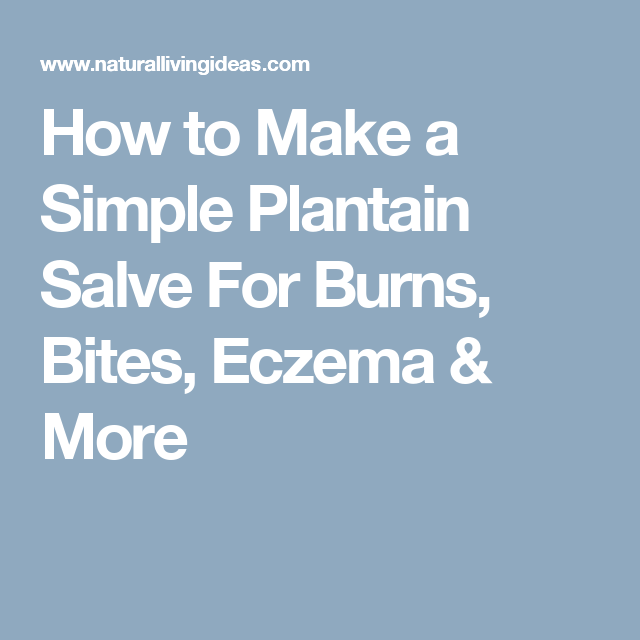 How to Make a Simple Plantain Salve For Burns, Bites, Eczema & More