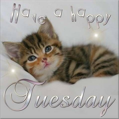 Have a happy Tuesday quotes cute quote cat pets kitten ...