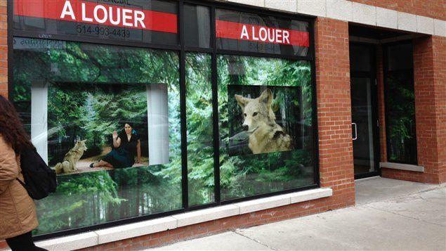 Des photographies géantes dans les commerces vacants pour embellir le boulevardSaint-Laurent