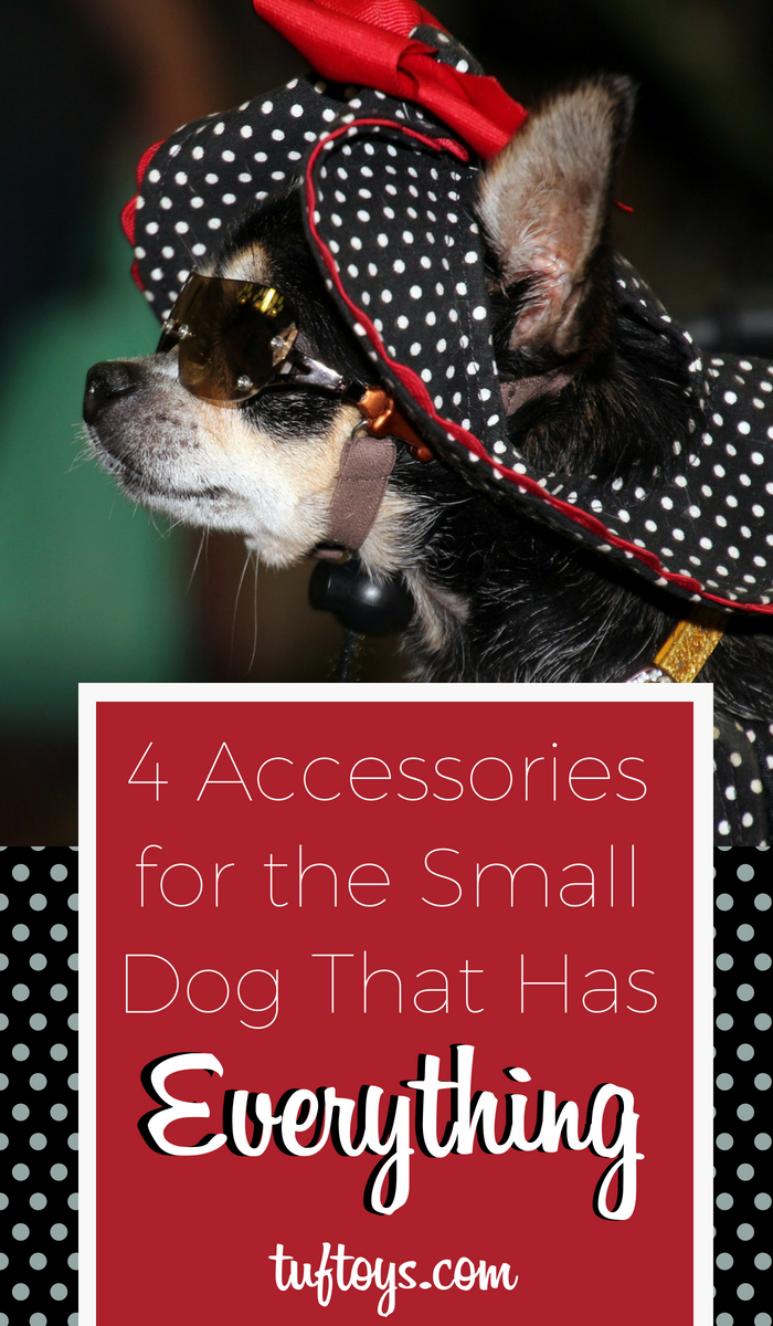 4 Accessories for the Pooch That Has Everything