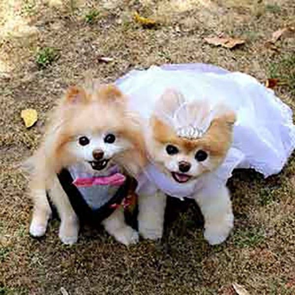 Boo The Pomeranian Marries His Boo Woofipedia By The American