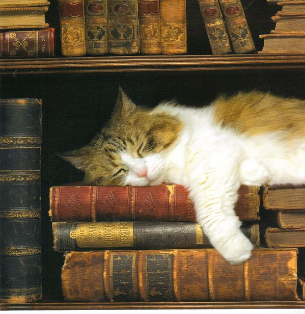 Calico Kittens Nap Anywhere  642347  Kitten Sleeping on Stack of Books