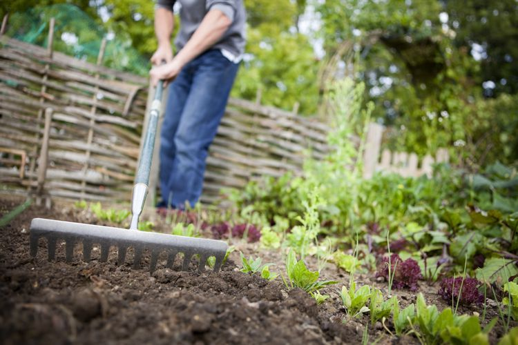 how to amend soil for tomatoes