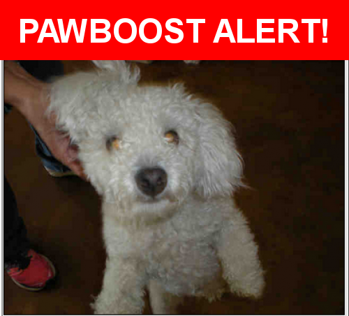Pin On Found Pets Of Austin Tx