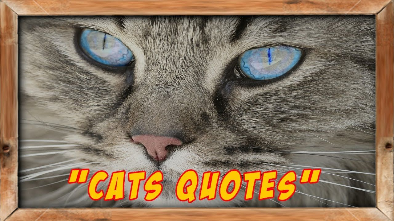 """""""Funny Pics Of Cats With Quotes"""" https://www.youtube.com/watch?v=ObcX5a5jEd0"""