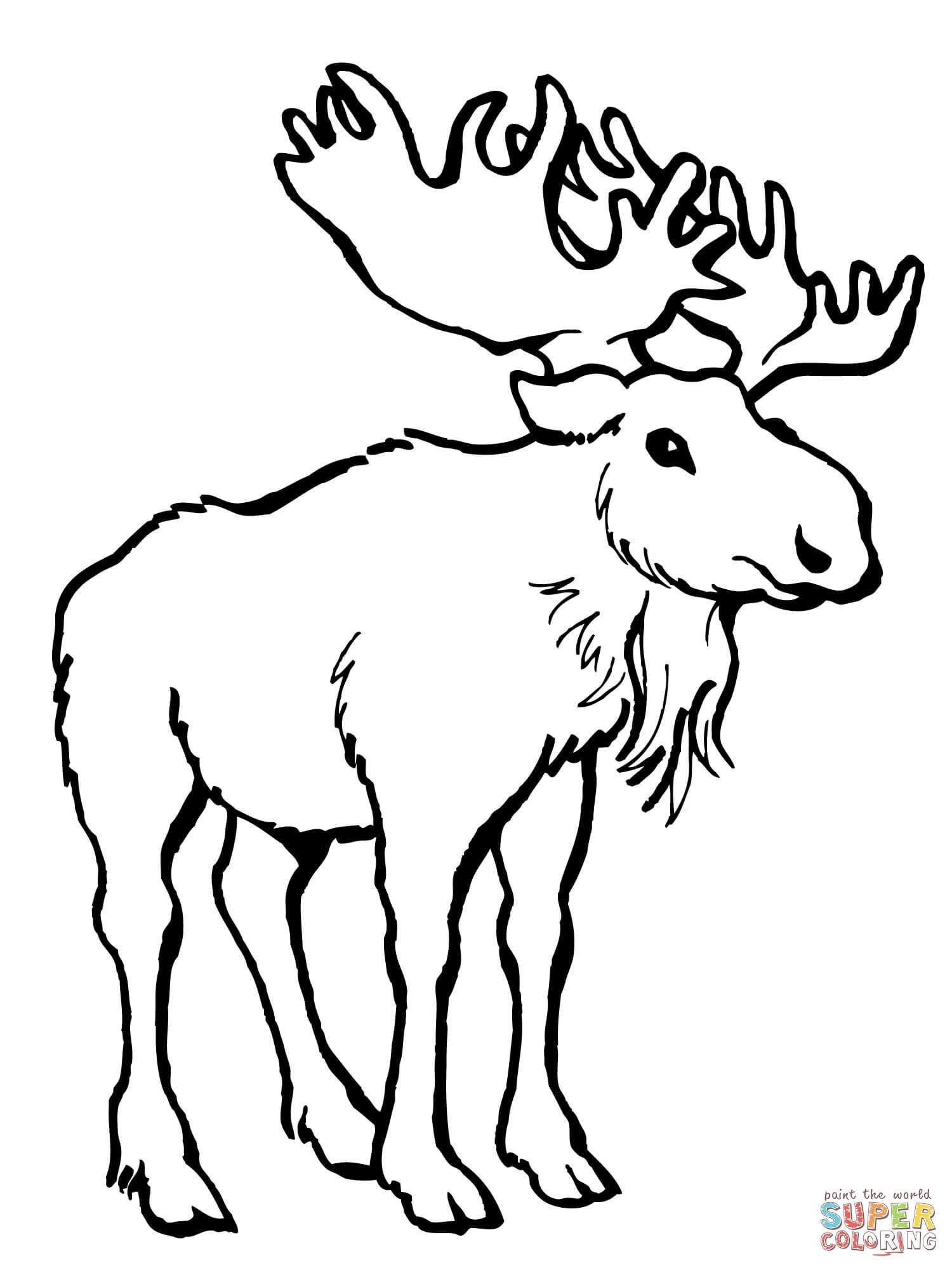 hight resolution of moose deer super coloring