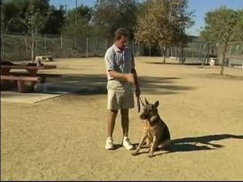 Basic Dog Training Tips How To Train A Dog To Heel Dog