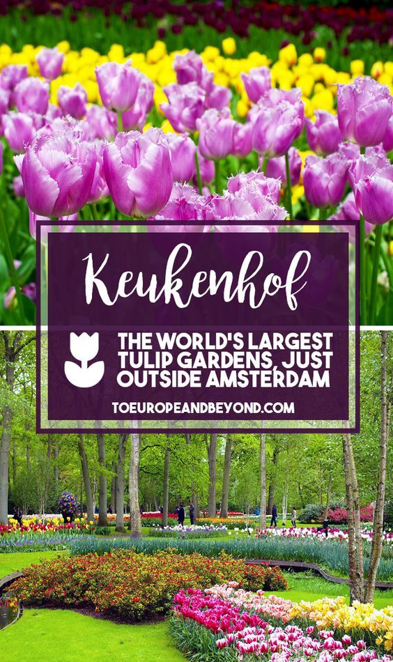 The Most Colourful Day Trip From Amsterdam Keukenhof