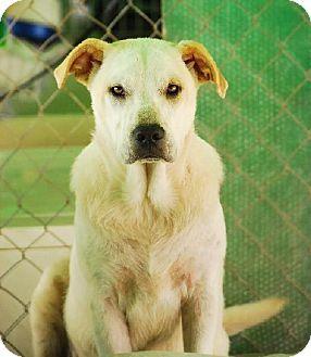 Pet Not Found Dog Friends Dog Adoption Pets