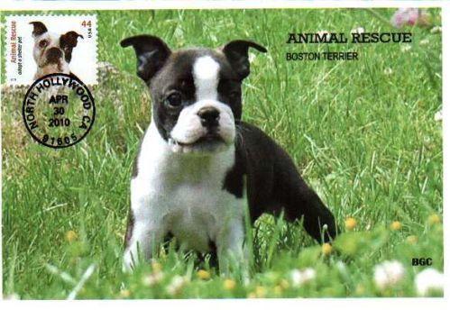 BGC Photo 4459 Animal Rescue Boston Terrier Dog   eBay