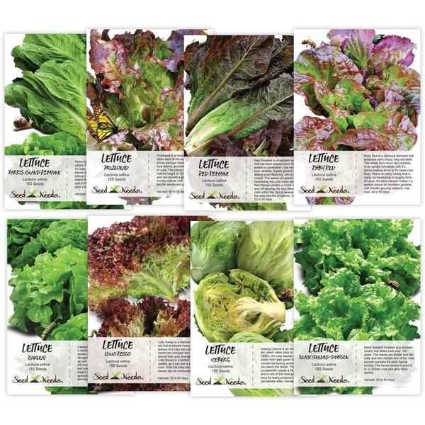 Lettuce Lovers Seed Collection | Vegetable garden for ...