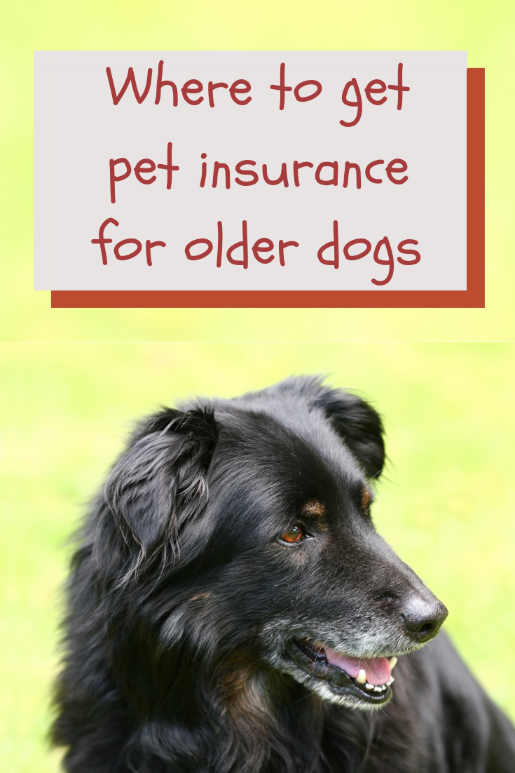 Can You Get Pet Insurance For Older Dogs Pet Insurance Reviews