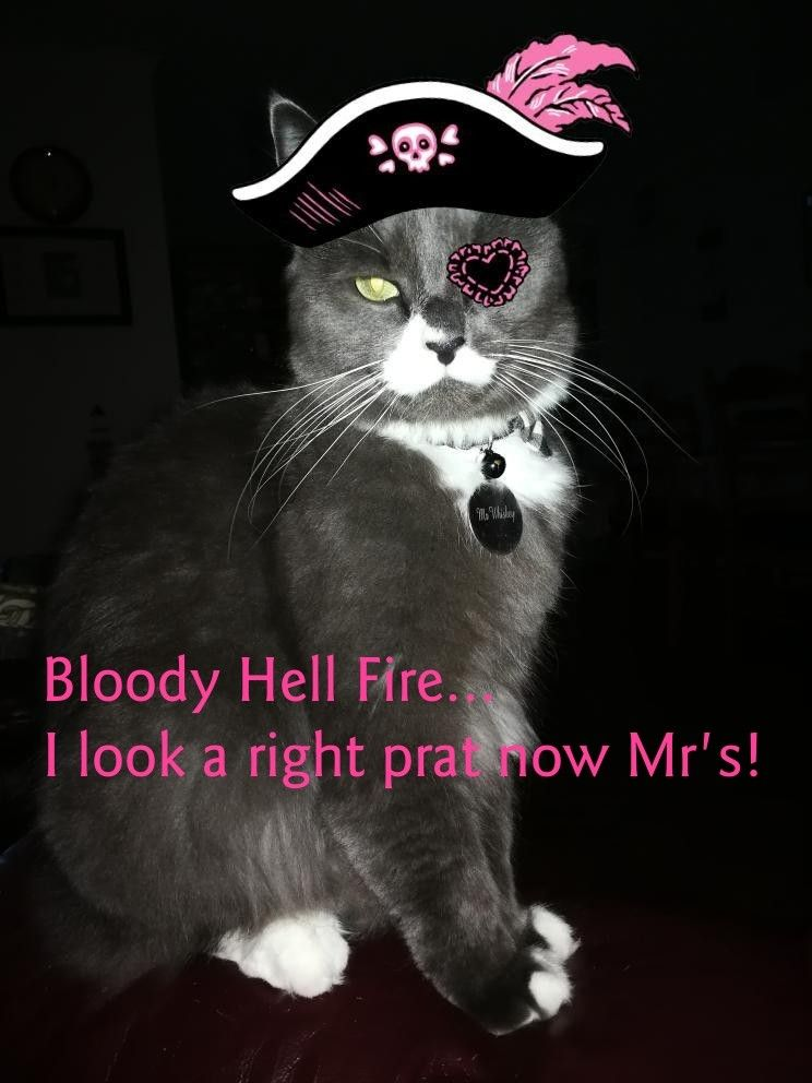 Pin By Lady Of Doncaster On One Cute Cat Called Mr Whiskey Kitten Rescue Cat Art Cat Call