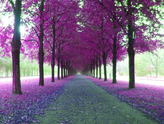 Pin By E V On Lilac Pinterest Beautiful Purple And Beautiful Places