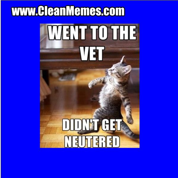 Cleanmemes Cleanimages Www Cleanmemes Com Clean Memes Cat Ball Neuter
