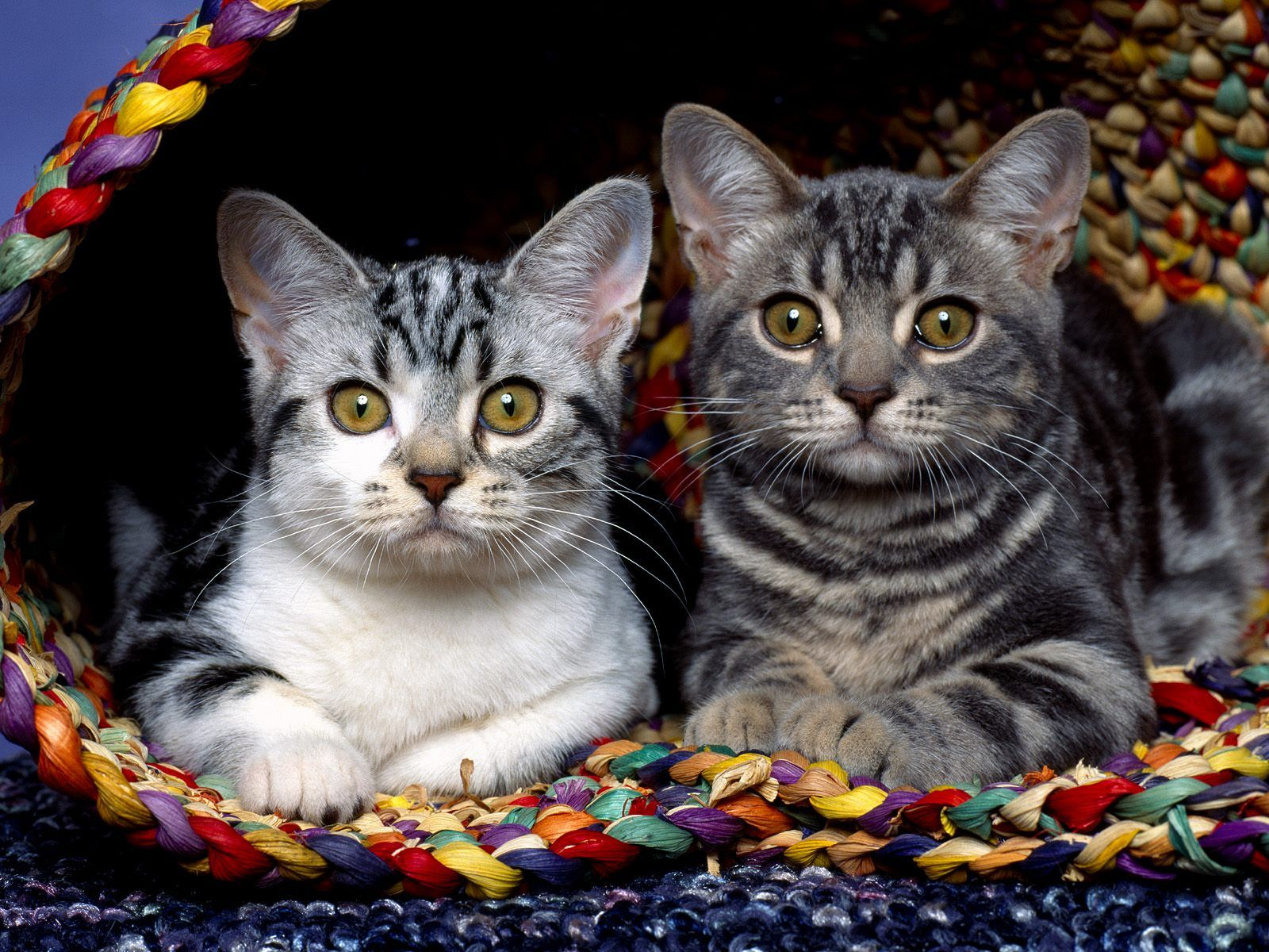 cute cats and kittens   Download Great Cute Kittens Funny Cats Pictures Wallpaper HD 1080p ...